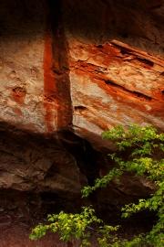 Natures Paint Stroke