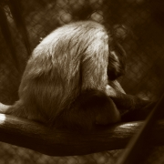 The Unbearable Pain  &  Sorrow